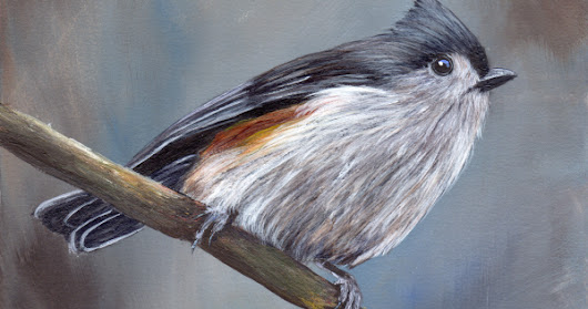 Tufted Titmouse No 10 in acrylics