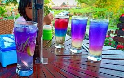 Minuman-bunga-telang