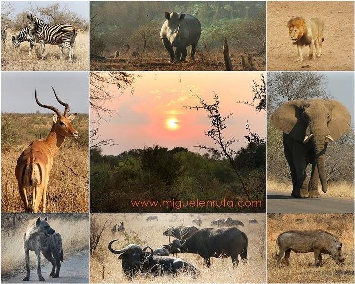 Safari-por-libre-Kruger-Sudáfrica