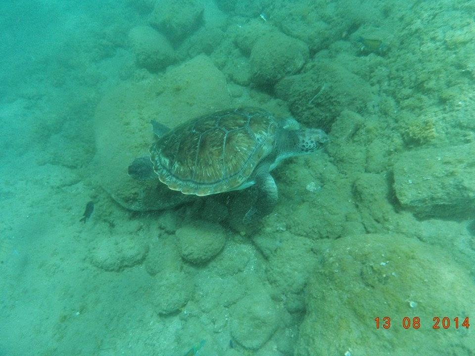 unterwasserkamera zum schnorcheln hd