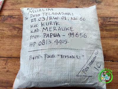 Benih pesana MUALIM Merauke, Papua.g  (Sesudah Packing)