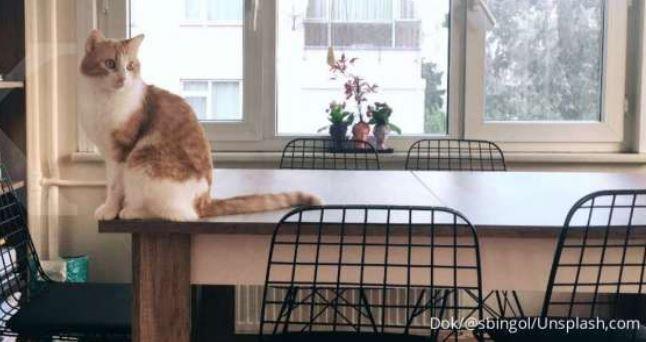 Arti  7 Perilaku Aneh Kucing