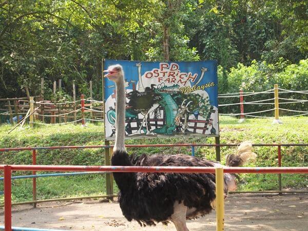 PD Ostrich Farm