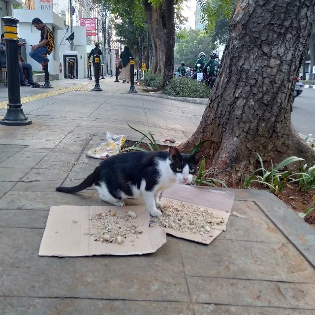 Kucing Makan Nasi Bungkus Spesial