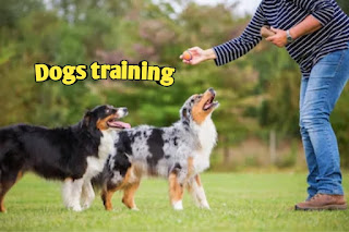 Everything related to dog training