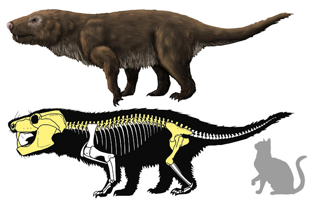 Brazilian carnivorous mammal-like reptile fossil may be new Aleodon species