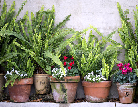 15 Φυτά κατάλληλα για σκιερά σημεία