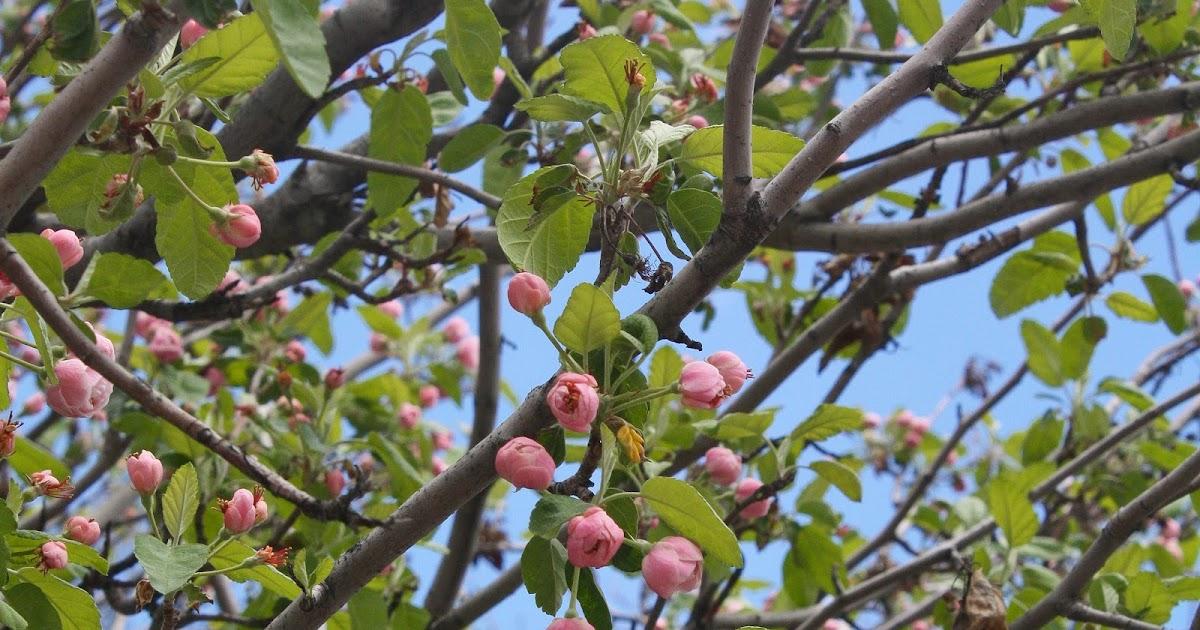 Sparrows Amp Spatulas Spring Time In Denver S Congress Park