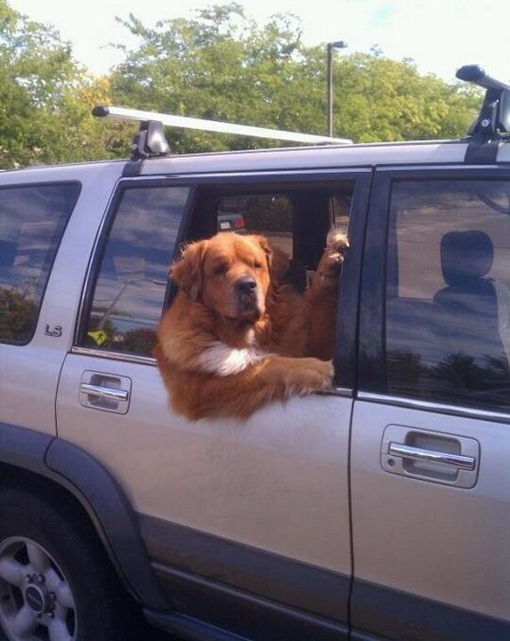 Best ever dog impersonator of Harry Redknapp