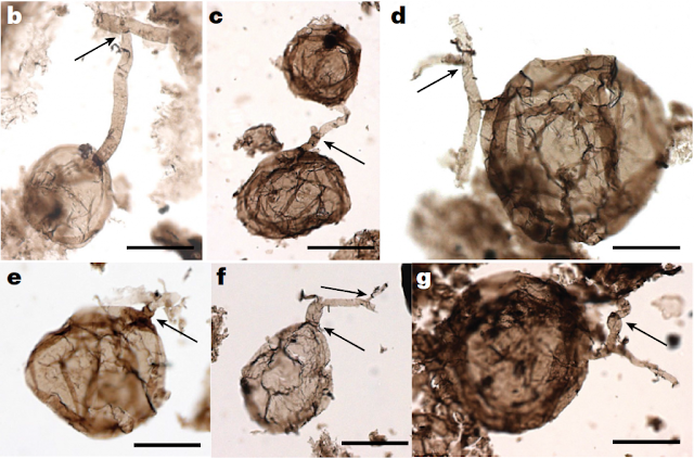 One billion year old fungi found are Earth's oldest