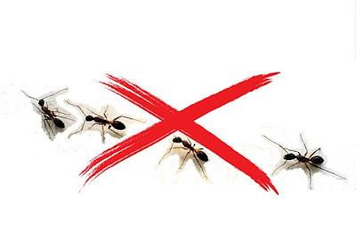 come-scacciare-formiche-in-casa-rimedio-fai-da-te