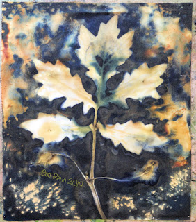 Wet cyanotype_Sue Reno_Image 621