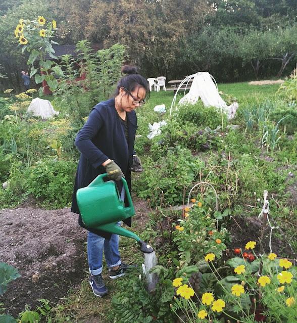 I gamle dager på Geitmyra. Her vanner jeg plantene mine i en lånt parsell.