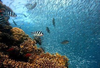 समुद्र से जुड़े कुछ आश्चर्यजनक और रोचक तथ्य (Amazing and Interesting facts about Sea in Hindi)