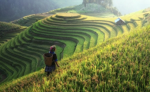 Most Common Agro Based Job ProfilesTitles