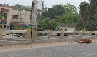 समस्तीपुर में लॉक डाउन के दौरान अनियंत्रित गाड़ी ने ओवर ब्रिज पर गाय को रौंदा मौत,उठाने वाला कोई नही।