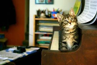 gato en el piano