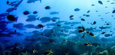 pulau kri papua raja ampat