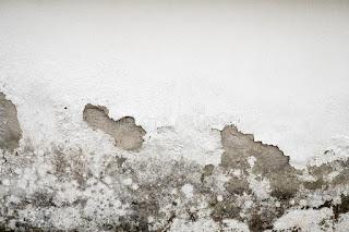 Los gusanos de la humedad. El problema en muchos hogares
