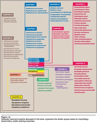 تحميل كتاب immunology