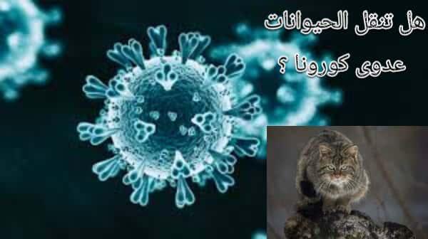 هل يمكن للحيوانات أن تنقل عدوى فيروس كورونا؟