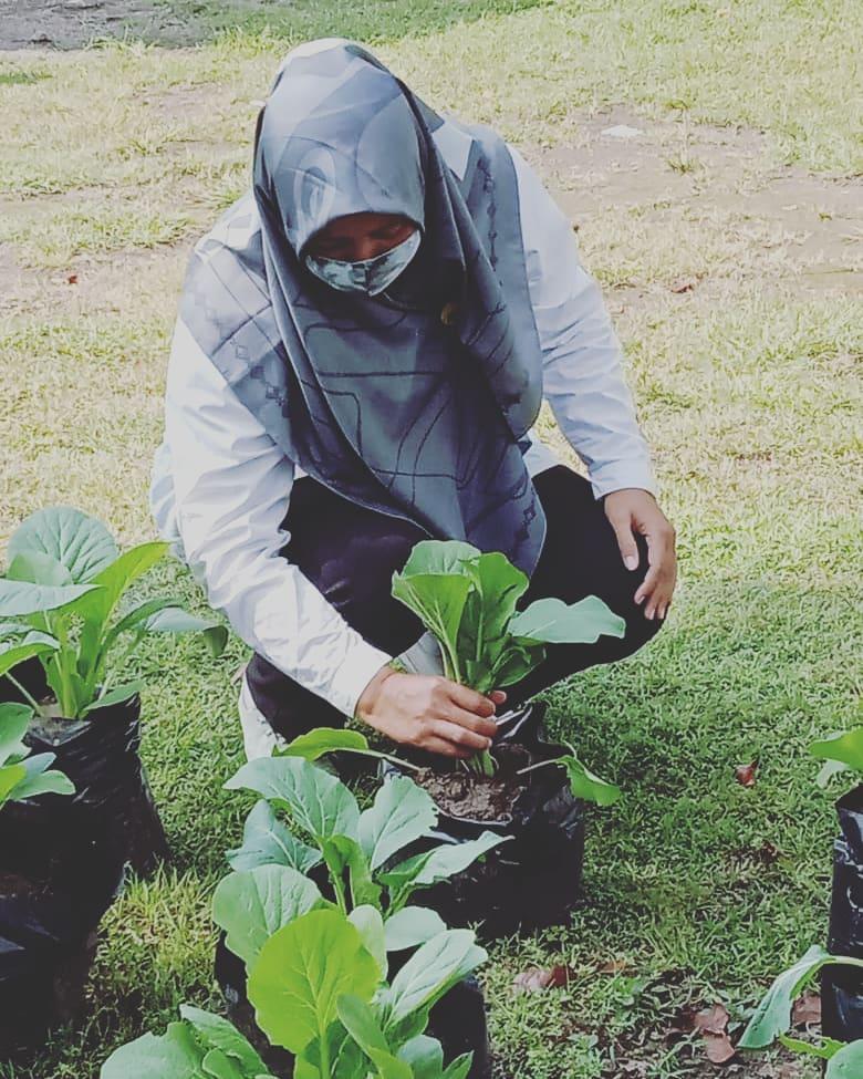 Panen Sawi WBS Bina Laras Balai RSBKL Dinas Sosial DIY