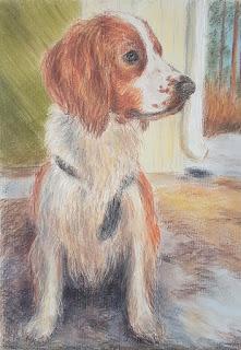 Pastelliväreillä väritetty koiran muotokuva