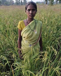organik-farming-and-profit