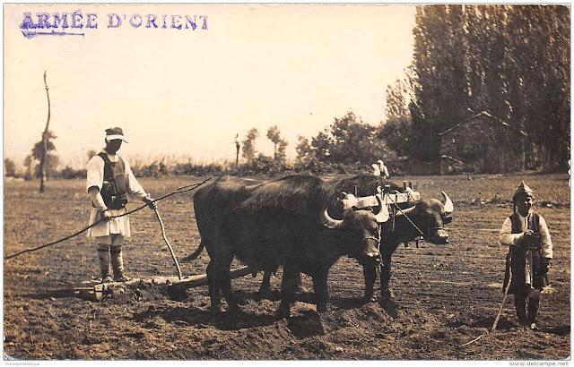 serbie-carte-photo-beau-cliche-attelage-labour