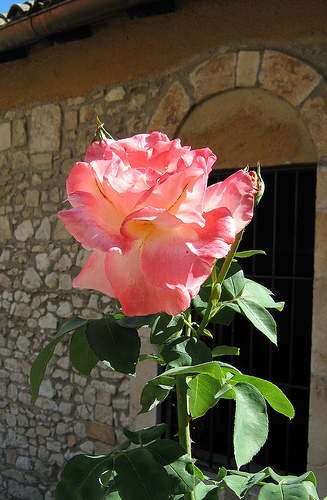 santa rosa onomastico
