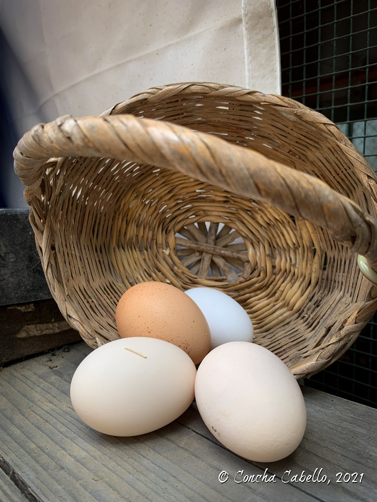 huevos-ecológicos