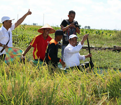 Menteri Pertanian, Amran Sulaiman saat Panen Padi di Kabupaten HSS Kalsel