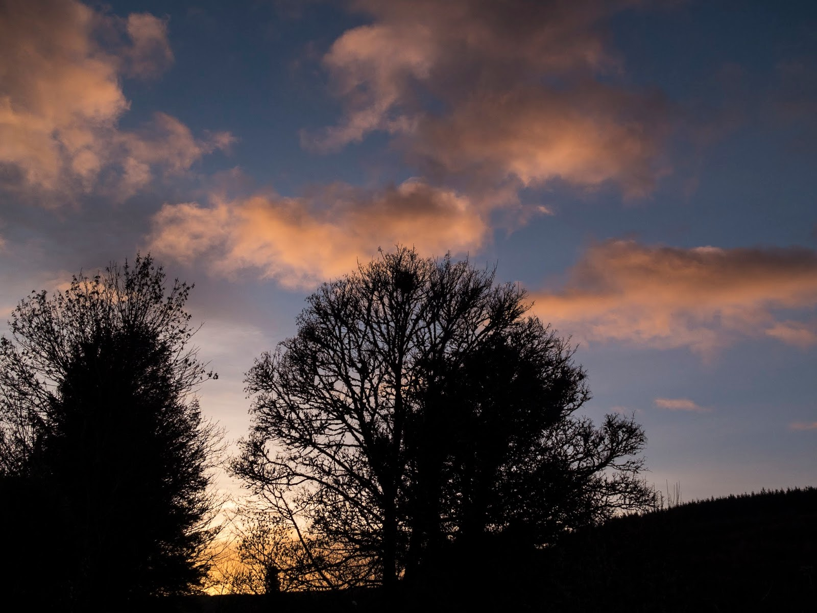 Silhouettes of mature trees at sunset with light pink clouds above.