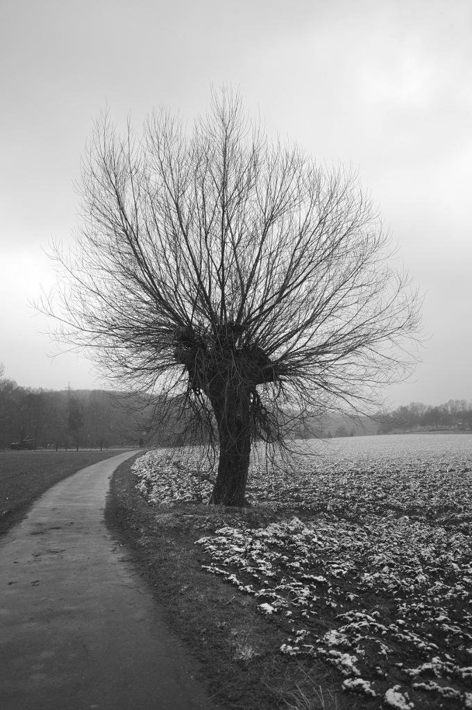 Baum in S/W