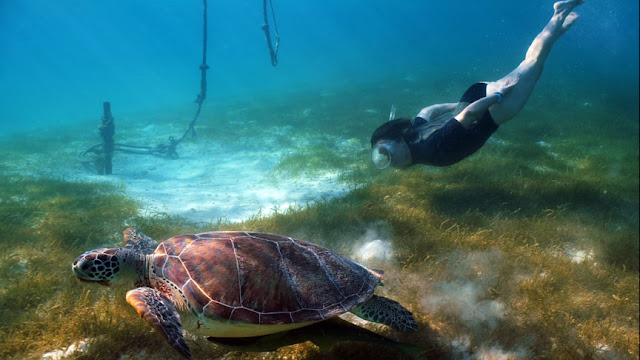 Bucear Majahual Quintana Roo