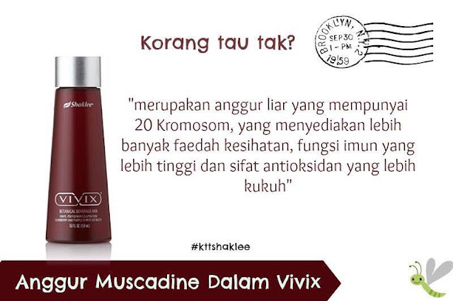 Image result for vivix antioksidan