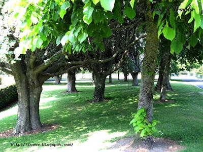 War Memorial Garden - Ireland