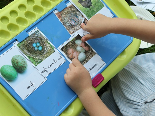 cartes-nomenclature-oiseau