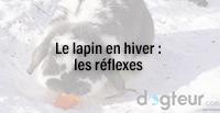Le lapin en hiver : les réflexes
