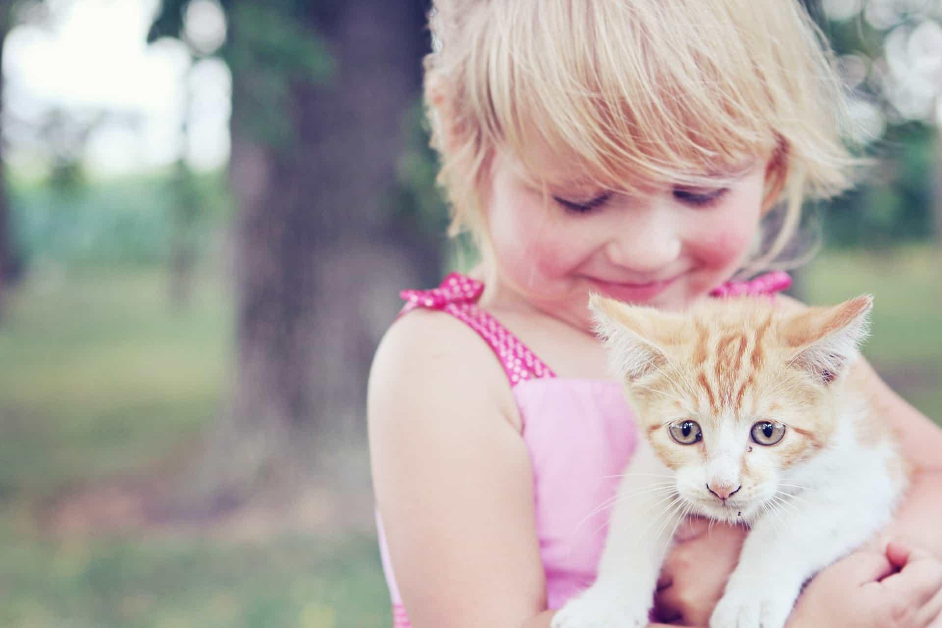 Voici ce que vous devez savoir sur l'alimentation de votre chaton