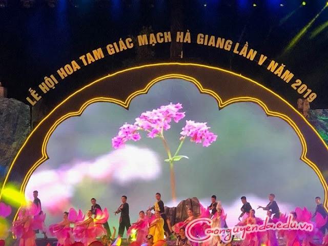 Khai mạc Lễ hội Hoa Tam giác mạch lần thứ V năm 2019,