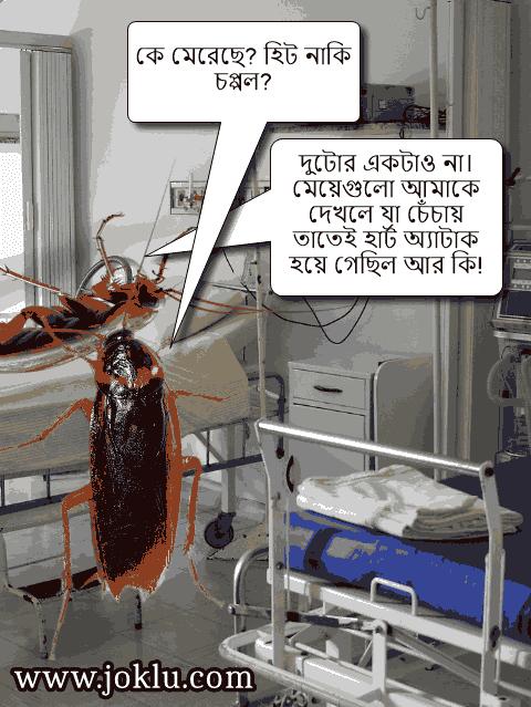 Cockroaches Bengali funny joke