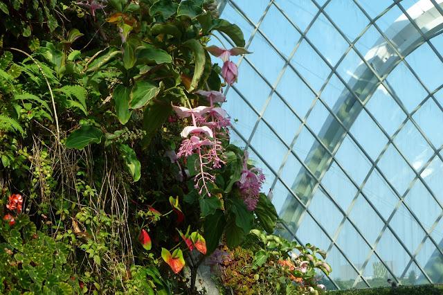 Kwiaty pod szkłem