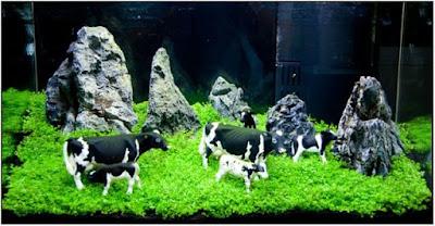 Aquascape iwagumi ada sapinya