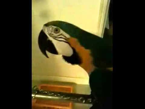 O-papagalos-neuriase-ki-arxise-to-WTF!