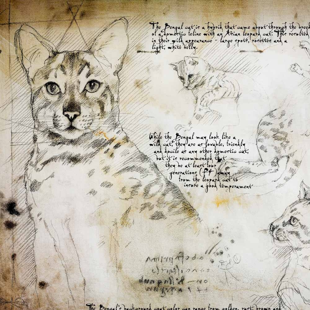 11-Bengal-Study-Leonardo-s-Dogs-Cats-and-Dogs-Drawn-in-the-style-of-Leonardo-da-Vinci
