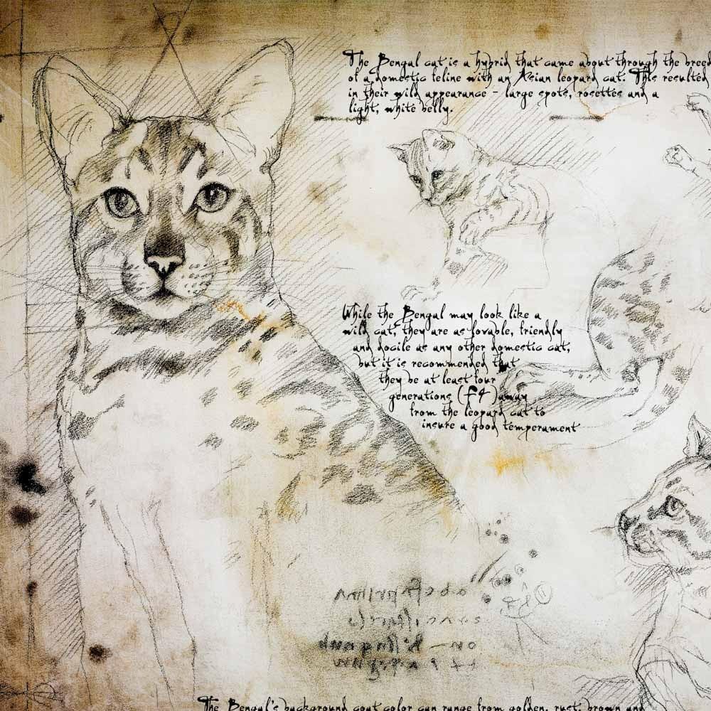 11-Bengal-Study-Leonardo-s-Dogs-Cats-and-Dogs-Drawn-in-the-style-of-Leonardo-da-Vinci