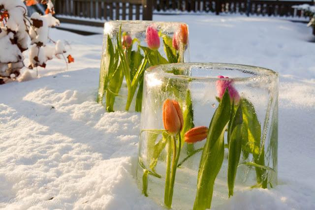 tulppaani jäälyhdyt talvi aurinko