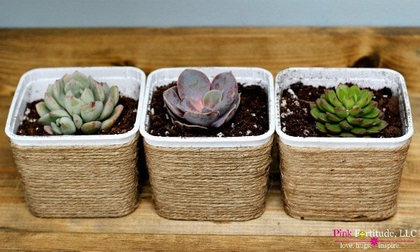 easy succulent project for teachers and others