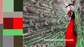 peacock color scheme, peacock color images